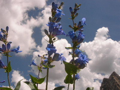 blue-sky-and-flowers